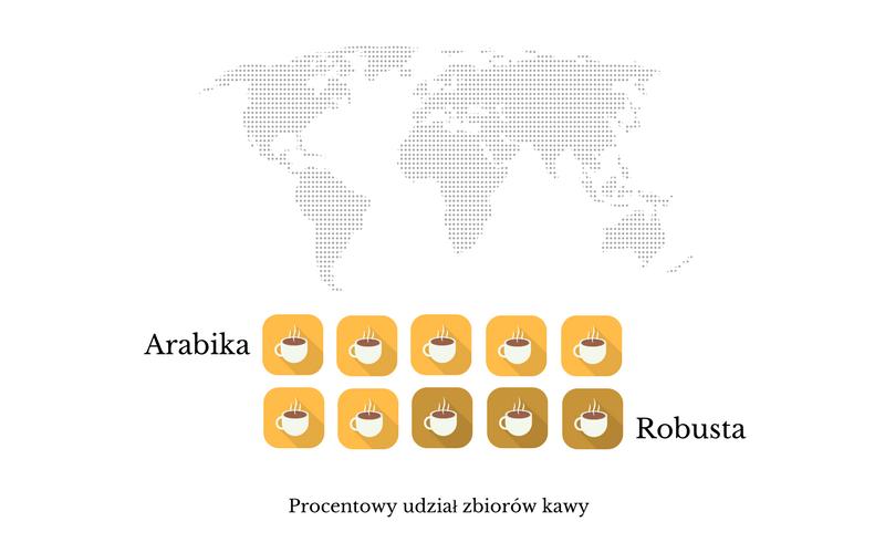 zbiory arabika vs robusta